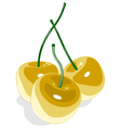 Yellow sweet cherry isolated on white vector image