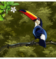 toucan bird in the tropical forest vector image