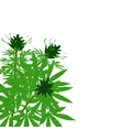 green bush of hemp vector image
