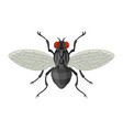 home fly in cartoon style vector image