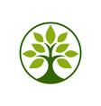 Tobacco-Tree-380x400 vector image