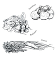 Hand drawn vegetables ink sketches set vector image