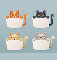 beggar cats animals need help paws hold blank vector image