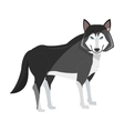 wolf cartoon icon vector image