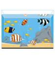 exotic fishes in aquarium vector image