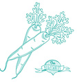 Outline hand drawn sketch of carrots flat style vector image