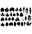 Set of different leaves vector image vector image