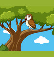 owl stands on branch at daytime vector image