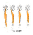 Set of fresh orange ripe carrots vector image