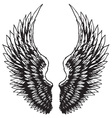 hand drawn eagle wings vector image