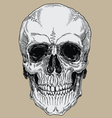 Realistic Cross Hatched Inked Human Skull vector image