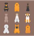 funny cartoon dog character bread cartoon puppy vector image