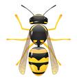 wasp vector image