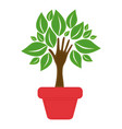 green tree with leaves inside flower pot vector image