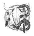 Bull skull with feathers snake and dreamcatcher vector image