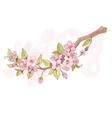 Sakura cherry branch vector image