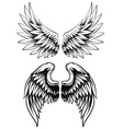 hand drawn wing set vector image vector image