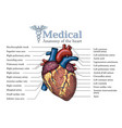 anatomical human heart hand drawn poster with vector image