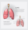 lung with detail vector image