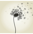Flower a dandelion2 vector image vector image