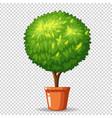 bonsai in clay pot vector image vector image