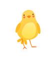 cute baby chicken funny cartoon bird character vector image