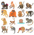 monkeys types icons set cartoon style vector image