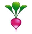 garden radish vector image vector image
