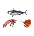 sketch lobster tuna fish squid isolated vector image vector image