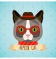 Hipster cat portrait vector image