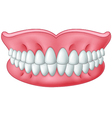 Cartoon model of teeth isolated on white backgroun vector image