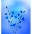 Bluebells vector image