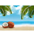 Coconut with palm leaves Summer vacation vector image vector image
