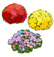 yellow pink and red flower beds isolated vector image