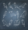 set of parrot icon sketches on chalkboard vector image