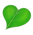 From nature with love vector image