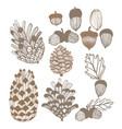 310 cones and acorns vector image