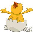 little chicken cartoon character vector image