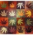 grunge hemp leaves vector image