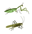 Mantis and grasshopper isolated vector image