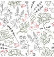 herbs seamless pattern herbal botanical outline vector image