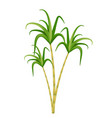 sugarcane icon realistic 3d style isolated on vector image