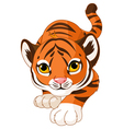 Crouching baby tiger vector image
