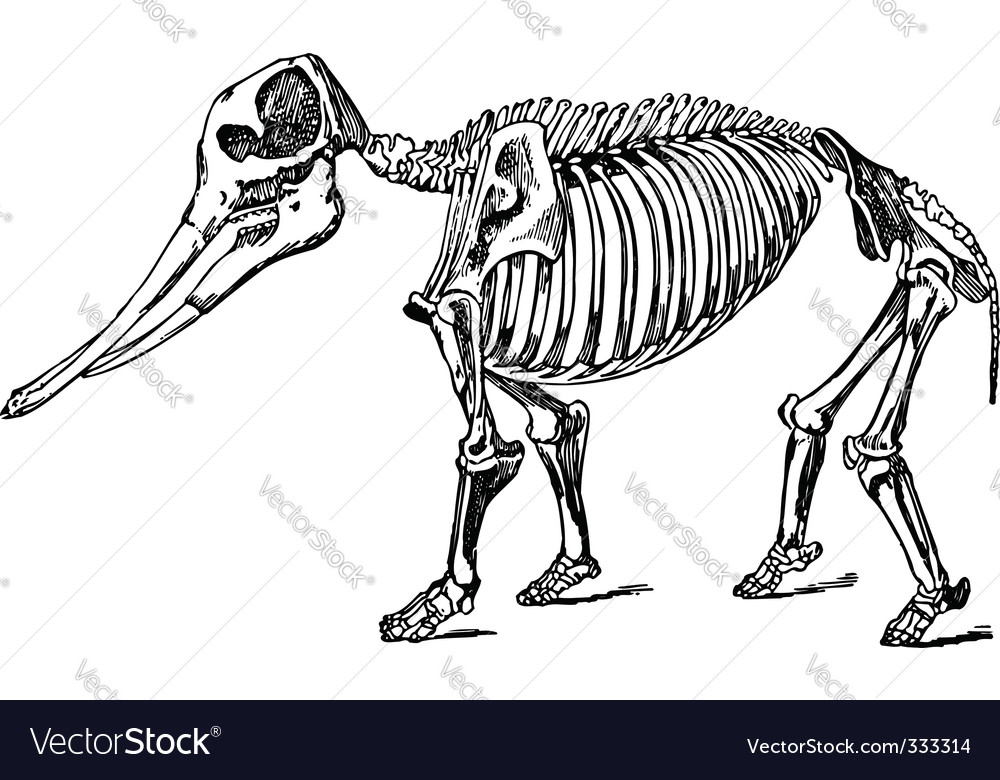 Animal skeleton vector