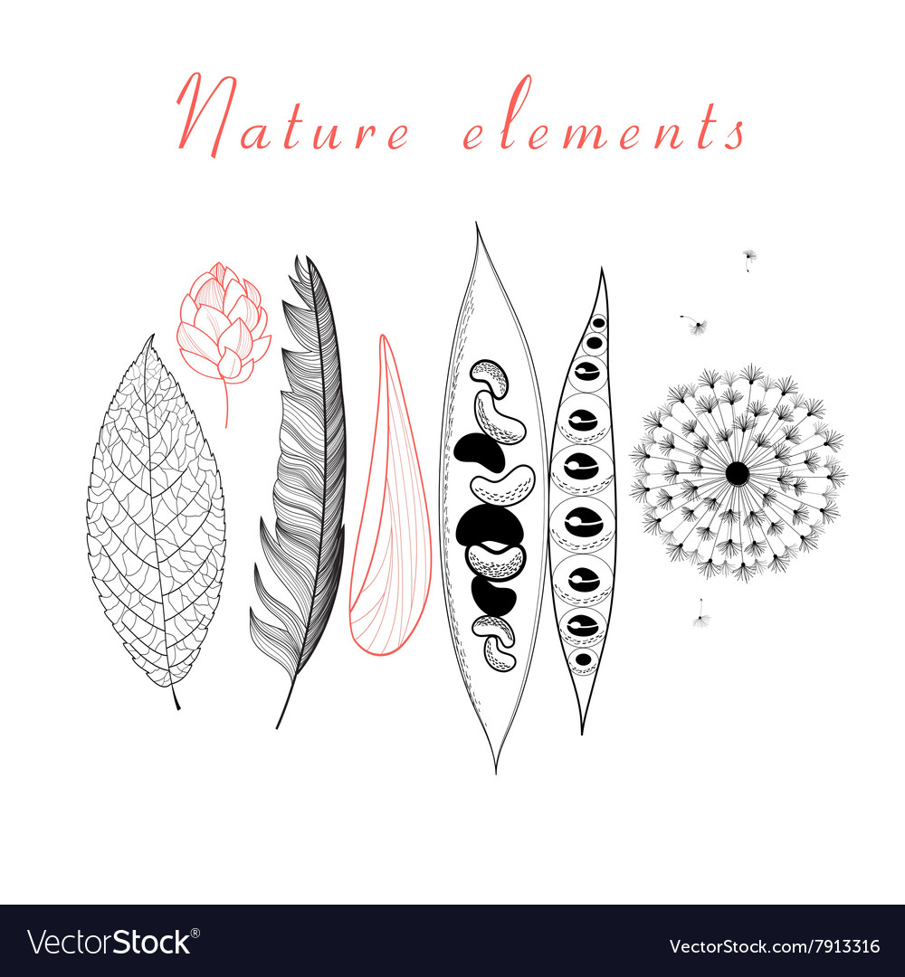 Natural set of different objects vector