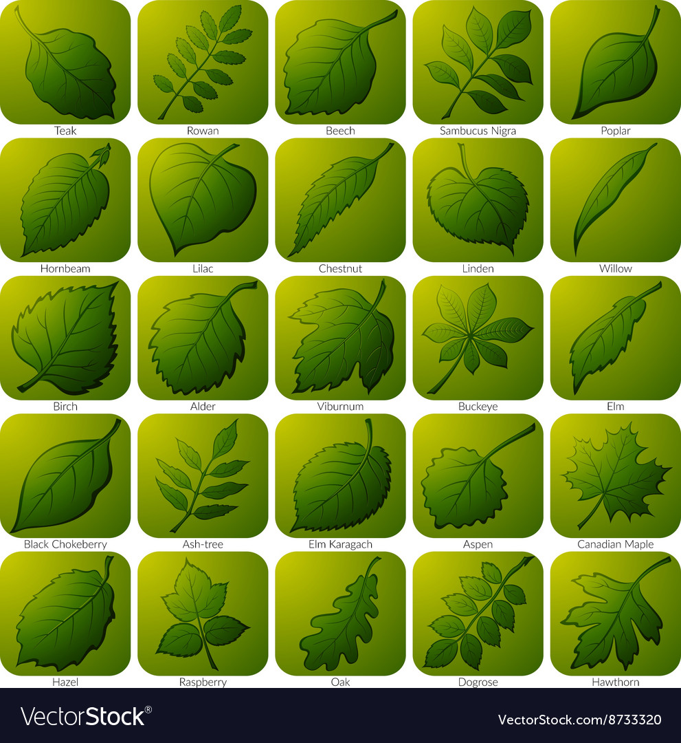 Icons with leaves set vector