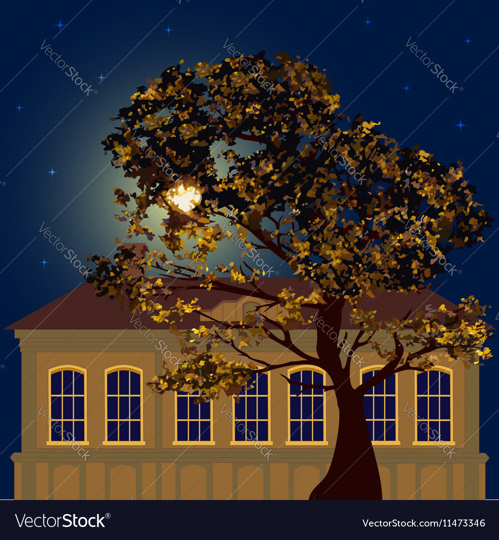 Starry night in the city vector