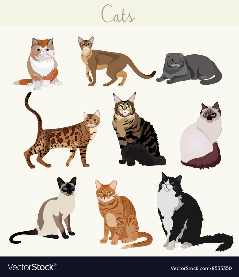 Breed cats in different poses cartoon vector