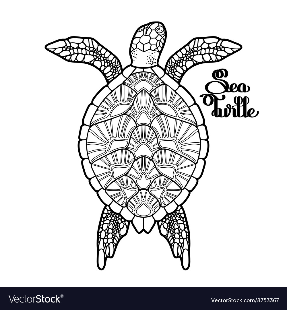 Hawksbill sea turtle vector
