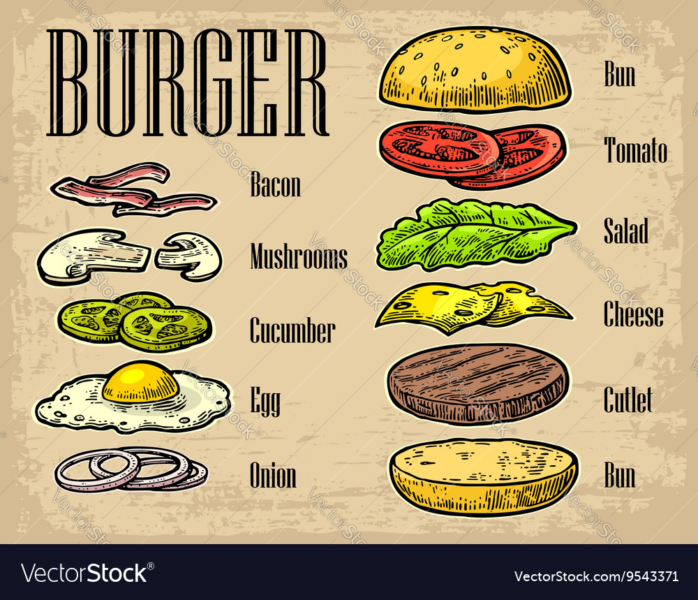 Burger ingredients on black background vector